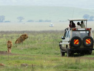 tourists in an off-road vehicle watching lions in the ngorongoro crater in tanzania